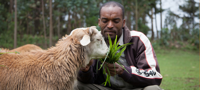 Feeding Innovation Researching Livestock Feed Opportunities For