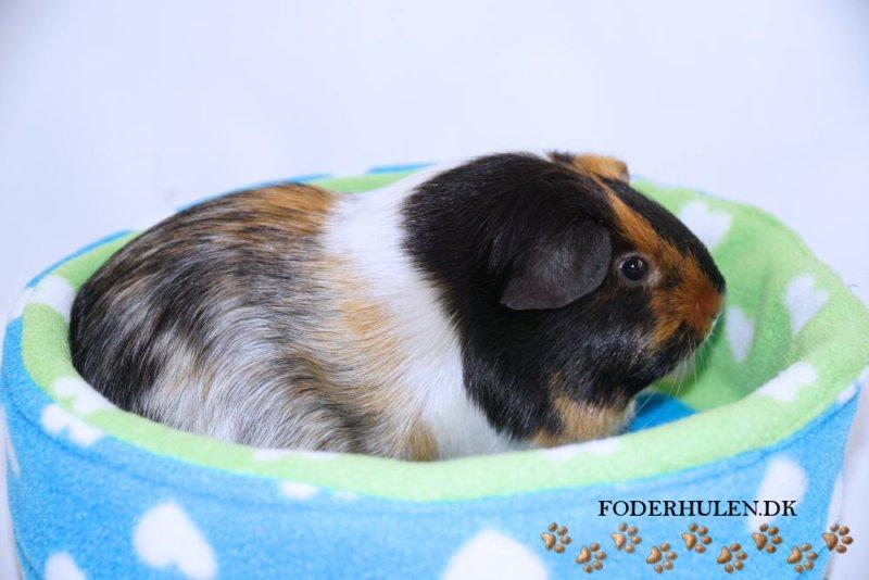 Piggy CuddleCup - Foderhulen.dk