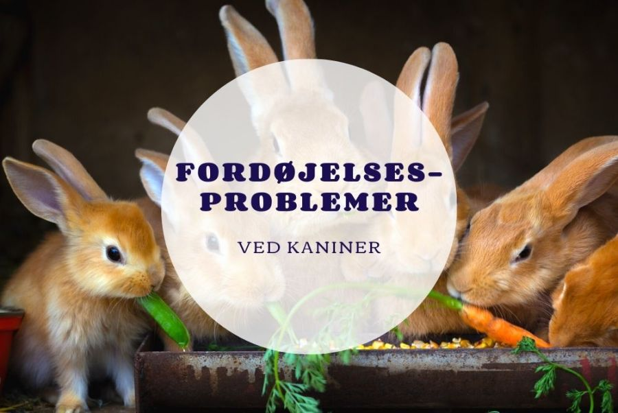 Fordøjelsesproblemer ved kaniner - Foderhulen.dk