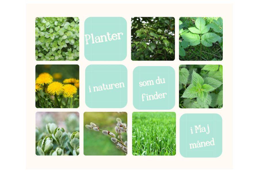 Spiselige planter - Foderhulen.dk