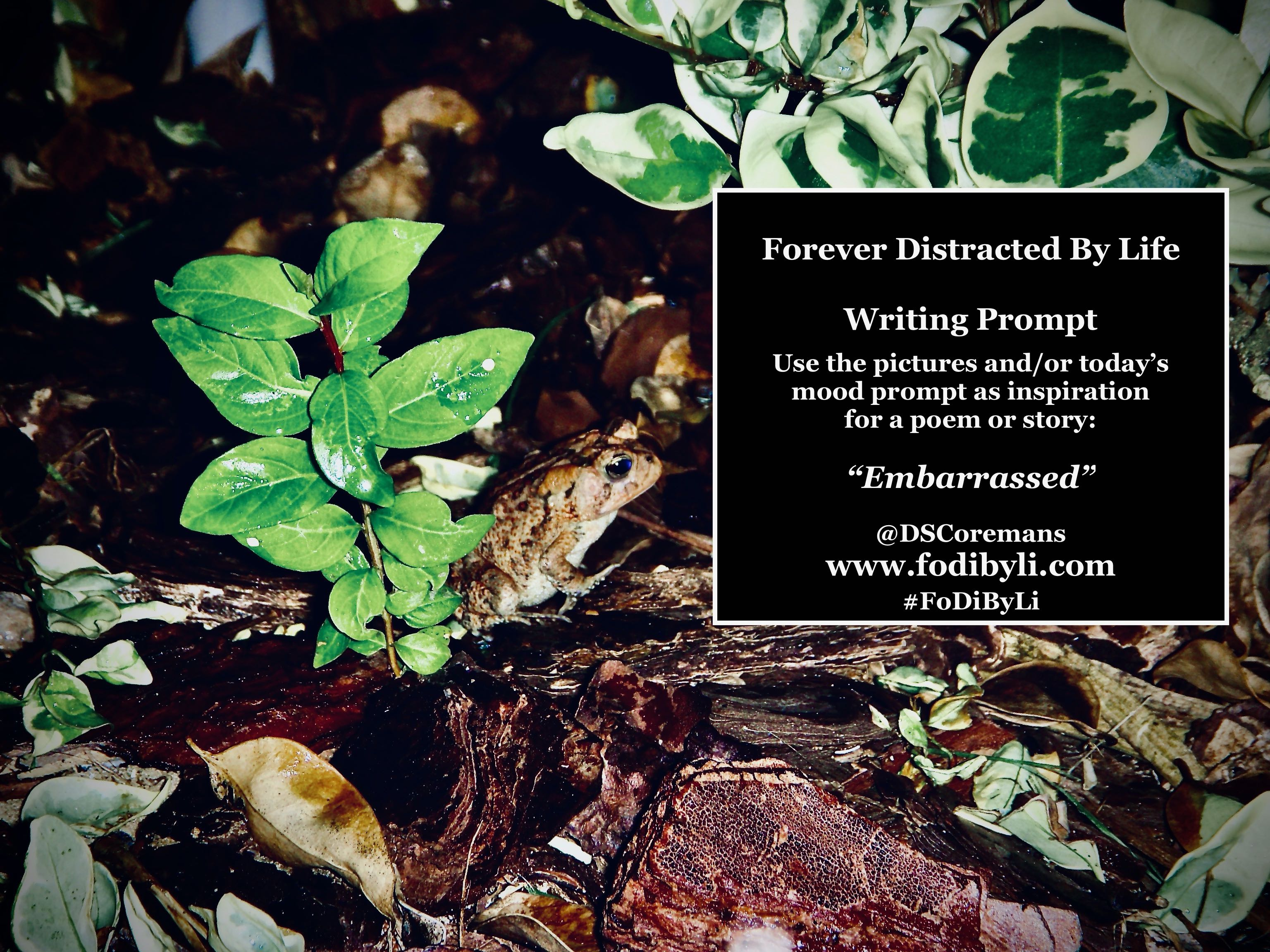 #FoDiByLi Poetry: The Month of Mood #25 – Embarrassed