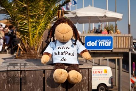 voll gechillt, Schaf Paul...