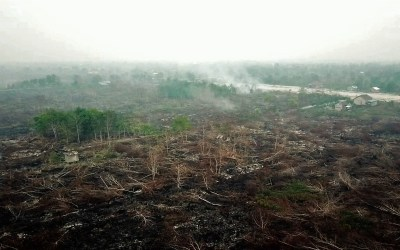 ASEAN, STAMP OUT THE ROOT CAUSES OF THE FOREST FIRES