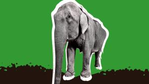 Pro Public secure interim order to stop illicit trade of elephants