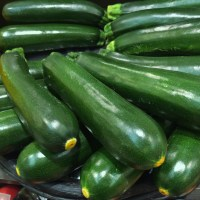 Black Beauty – Summer Squash Zucchini