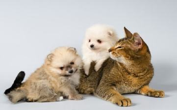 home remedies for worms in cats