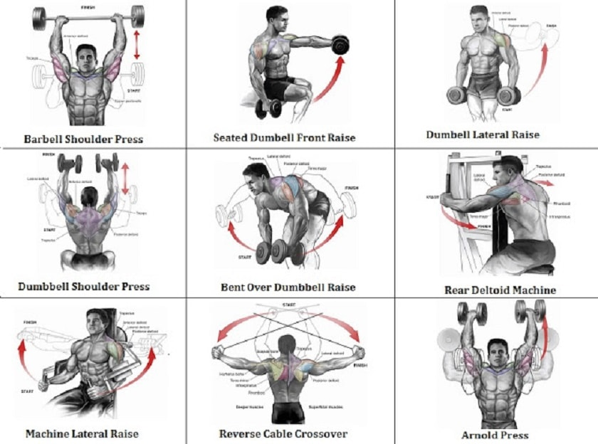 5 Best Shoulder Exercises that Can Turn You into Beast