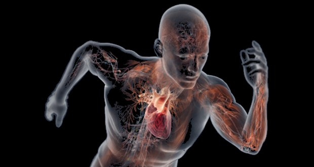 Adrenaline: Symptoms, Uses and Effects on Human Body