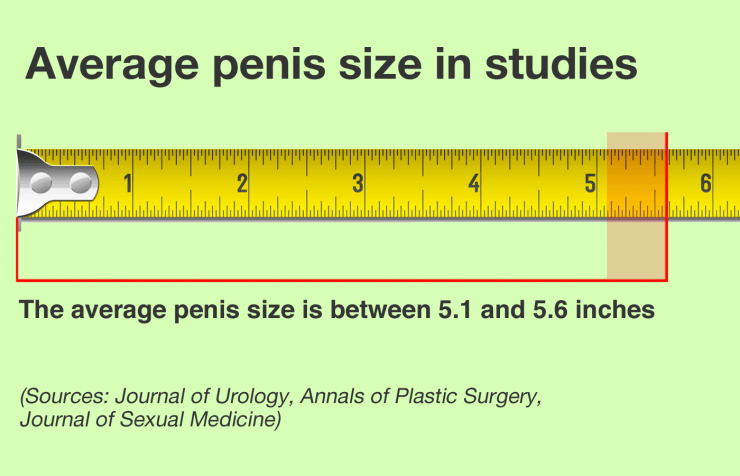 size penis a the average is What