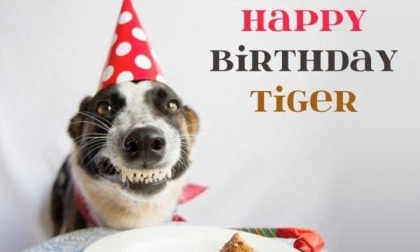 happy birthday tiger