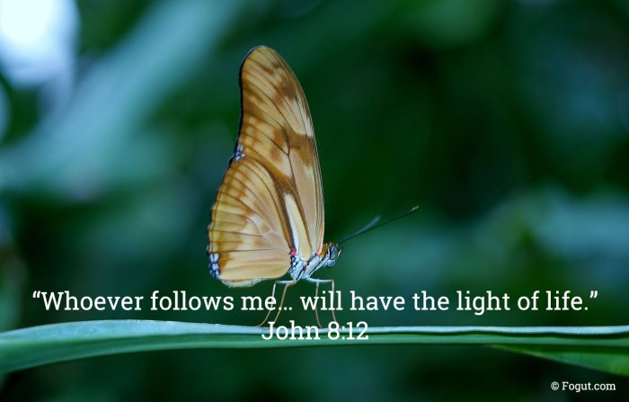 Whoever follows me… will have the light of life