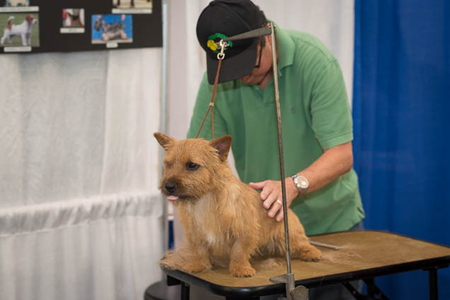 hawaii-pet-expo-2019-honolulu-blaisdell-fokopoint-3060 Hawaii Pet Expo 2019