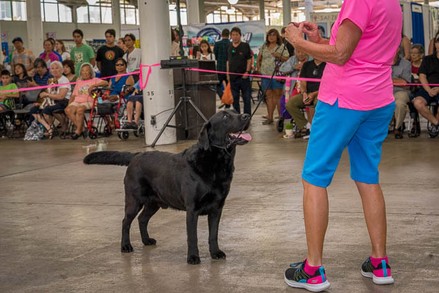 hawaii-pet-expo-2019-honolulu-blaisdell-fokopoint-3069 Hawaii Pet Expo 2019