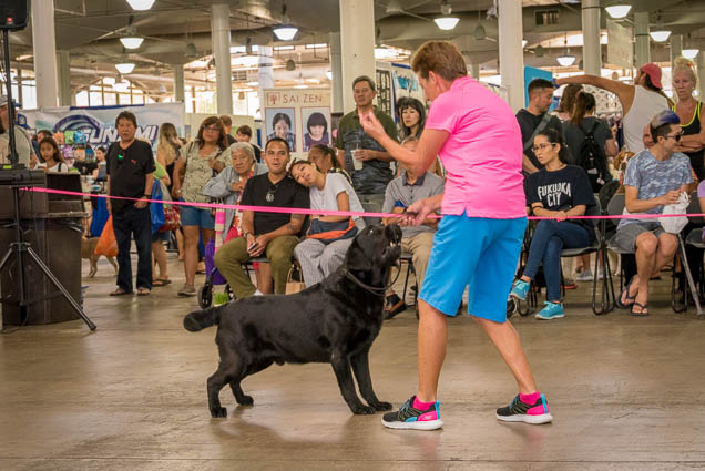 hawaii-pet-expo-2019-honolulu-blaisdell-fokopoint-3072 Hawaii Pet Expo 2019