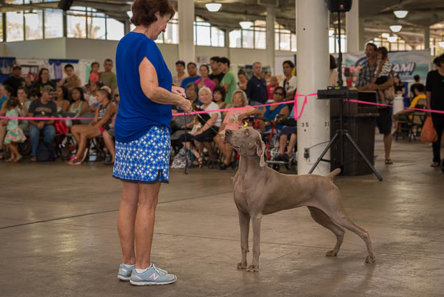hawaii-pet-expo-2019-honolulu-blaisdell-fokopoint-3086 Hawaii Pet Expo 2019