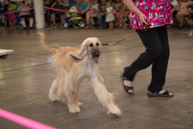 hawaii-pet-expo-2019-honolulu-blaisdell-fokopoint-3087 Hawaii Pet Expo 2019
