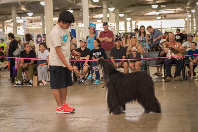 hawaii-pet-expo-2019-honolulu-blaisdell-fokopoint-3094 Hawaii Pet Expo 2019