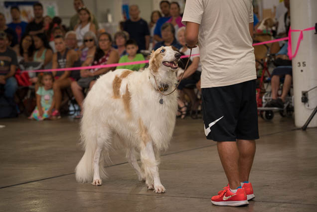 hawaii-pet-expo-2019-honolulu-blaisdell-fokopoint-3111 Hawaii Pet Expo 2019