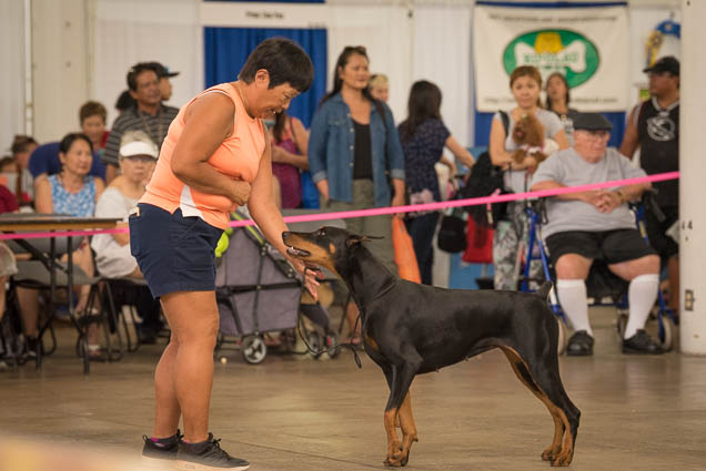 hawaii-pet-expo-2019-honolulu-blaisdell-fokopoint-3147 Hawaii Pet Expo 2019