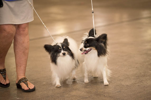 hawaii-pet-expo-2019-honolulu-blaisdell-fokopoint-3274 Hawaii Pet Expo 2019