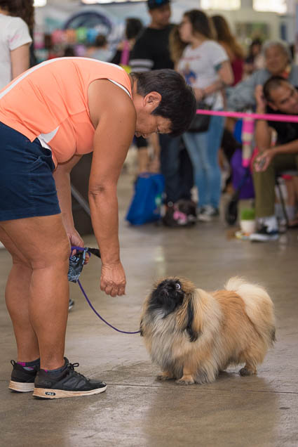 hawaii-pet-expo-2019-honolulu-blaisdell-fokopoint-3280 Hawaii Pet Expo 2019