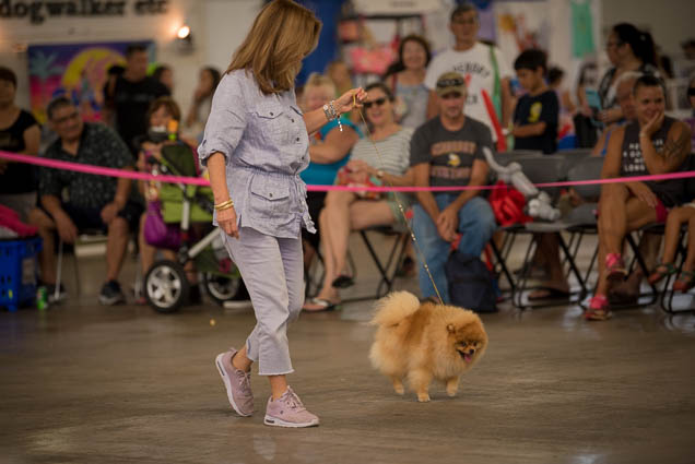 hawaii-pet-expo-2019-honolulu-blaisdell-fokopoint-3292 Hawaii Pet Expo 2019