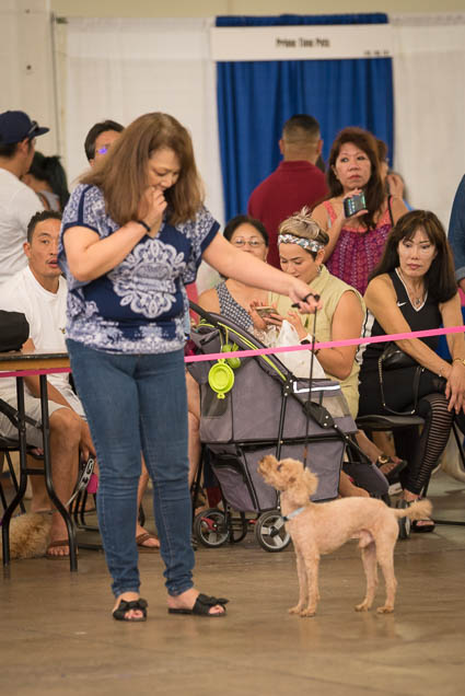 hawaii-pet-expo-2019-honolulu-blaisdell-fokopoint-3301 Hawaii Pet Expo 2019