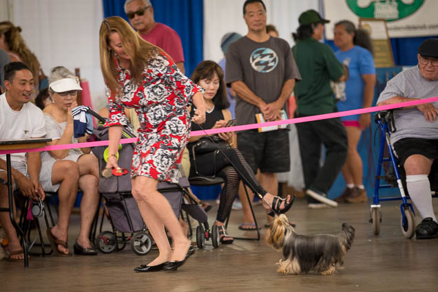 hawaii-pet-expo-2019-honolulu-blaisdell-fokopoint-3324 Hawaii Pet Expo 2019