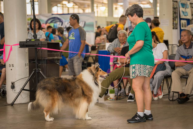 hawaii-pet-expo-2019-honolulu-blaisdell-fokopoint-3420 Hawaii Pet Expo 2019