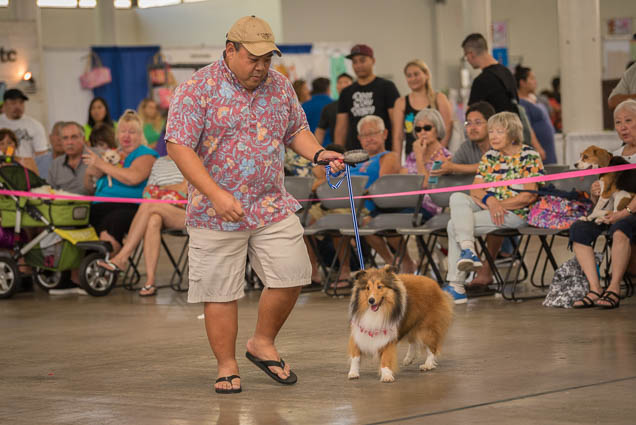 hawaii-pet-expo-2019-honolulu-blaisdell-fokopoint-3451 Hawaii Pet Expo 2019