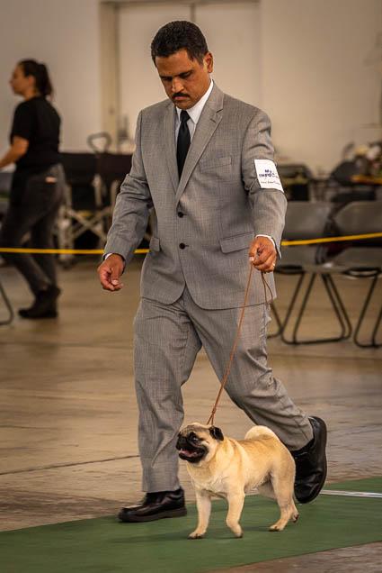hawaiian-kennel-club-dog-show-2019-blaisdell-honolulu-fokopoint-7043 Hawaiian Kennel Club Dog Show 2019