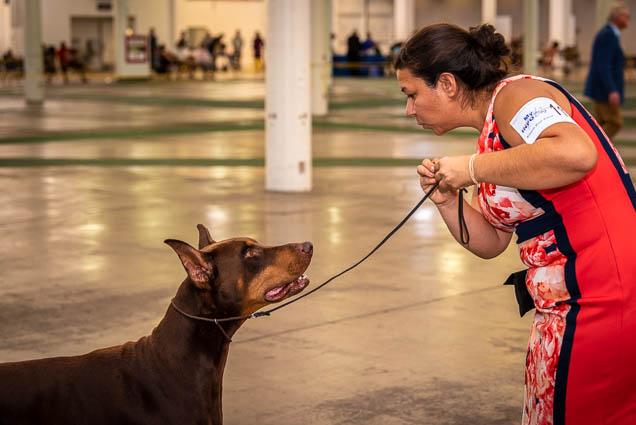 hawaiian-kennel-club-dog-show-2019-blaisdell-honolulu-fokopoint-7128 Hawaiian Kennel Club Dog Show 2019