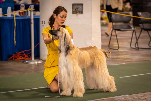 hawaiian-kennel-club-dog-show-2019-blaisdell-honolulu-fokopoint-7134-1 Hawaiian Kennel Club Dog Show 2019