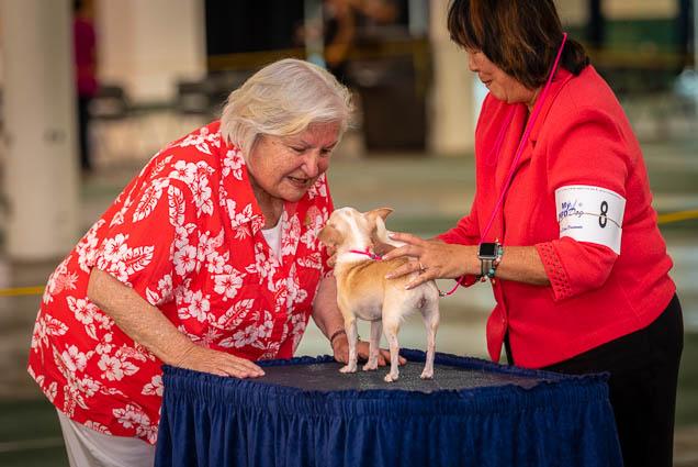 hawaiian-kennel-club-dog-show-2019-blaisdell-honolulu-fokopoint-7154 Hawaiian Kennel Club Dog Show 2019
