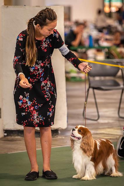 hawaiian-kennel-club-dog-show-2019-blaisdell-honolulu-fokopoint-7214 Hawaiian Kennel Club Dog Show 2019