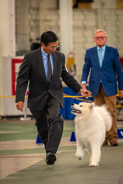 hawaiian-kennel-club-dog-show-2019-blaisdell-honolulu-fokopoint-7373 Hawaiian Kennel Club Dog Show 2019