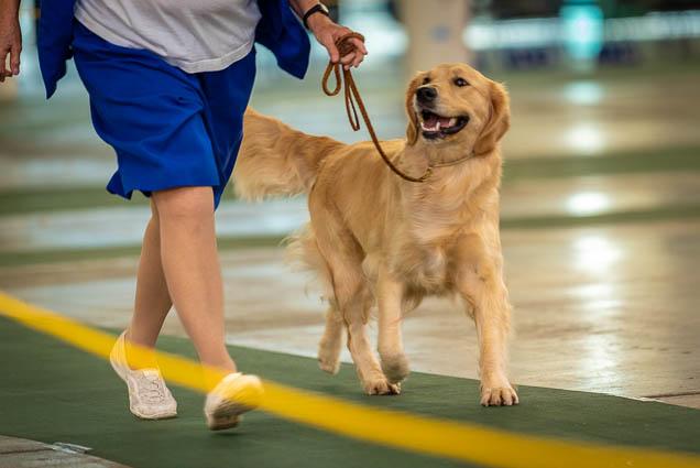 hawaiian-kennel-club-dog-show-2019-blaisdell-honolulu-fokopoint-7463 Hawaiian Kennel Club Dog Show 2019