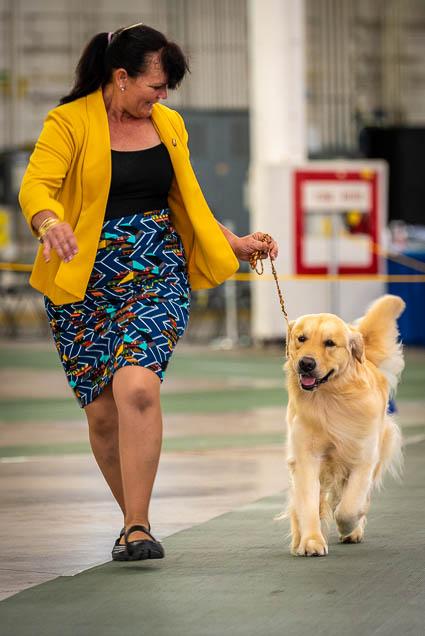 hawaiian-kennel-club-dog-show-2019-blaisdell-honolulu-fokopoint-7501 Hawaiian Kennel Club Dog Show 2019