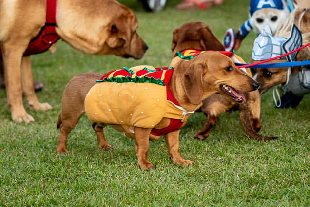 hot-dog-petblock-paina-honolulu-2019-fokopoint-1552 PetBlock Paina at Victoria Ward Park