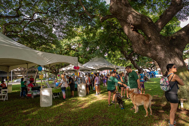 namiwalks-hawaii-honolulu-2019-fokopoint-0883 NamiWalks Oahu at Civic Grounds