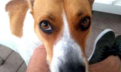 pena para quem maltratar cães e gatos