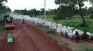 Read more about the article Estado inicia cascalhamento de mais uma estrada implantada no Pantanal