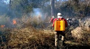 Read more about the article Força Nacional vai apoiar combate às queimadas no Pantanal