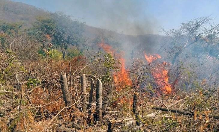 Read more about the article Bombeiros combatem incêndio em área de desmatamento no Anel Viário
