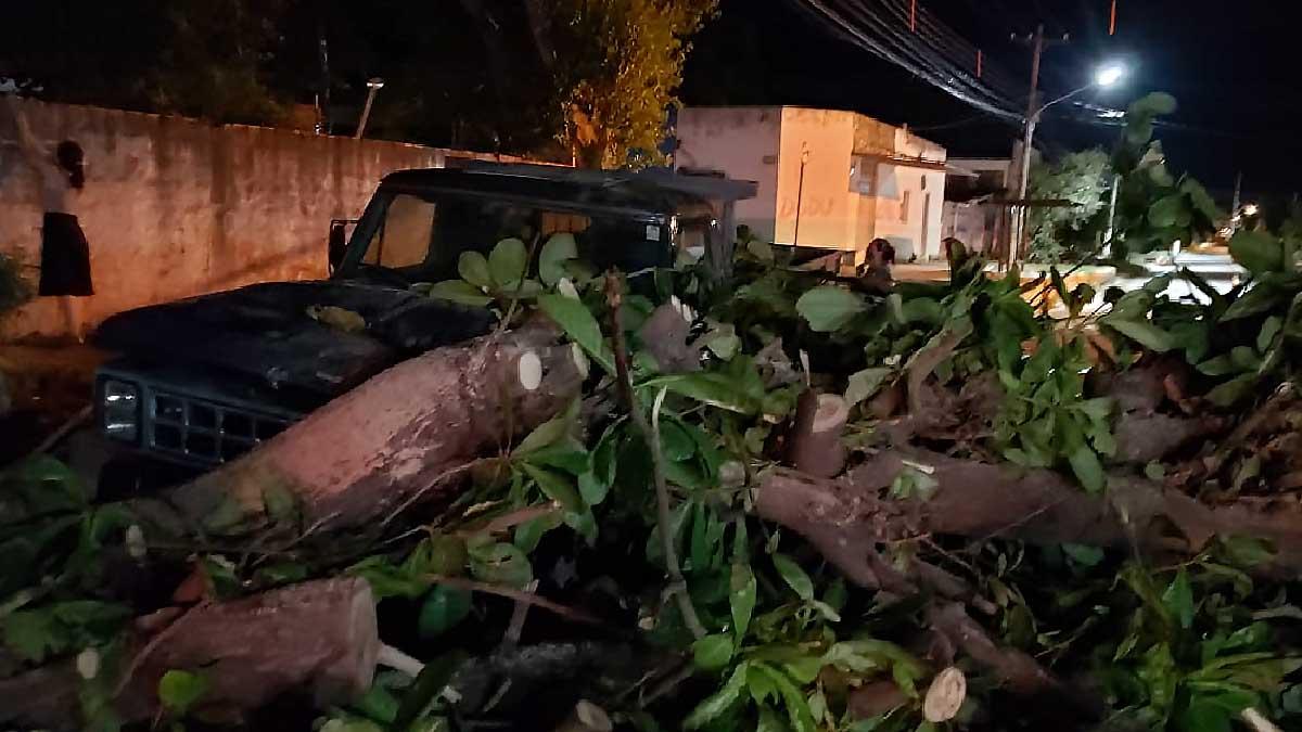 Read more about the article Bombeiros registram 8 quedas de árvores durante ventania em Corumbá