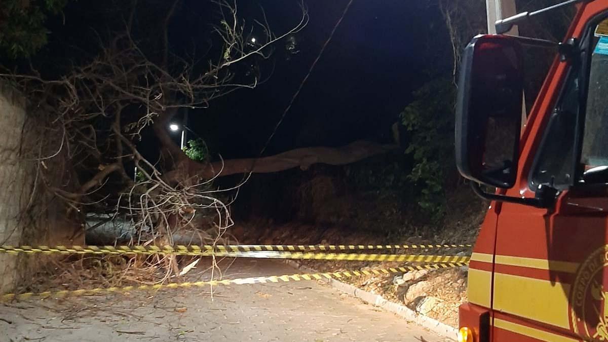 You are currently viewing Queda de árvore e acidente de trânsito mobilizam equipes do Corpo de Bombeiros