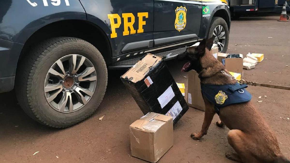 Read more about the article PRF e Correios realizam operação conjunta para interceptar encomendas com drogas em Campo Grande
