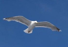 As Duas Asas do Pássaro