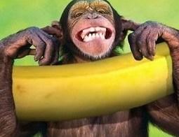 bananas e macacos