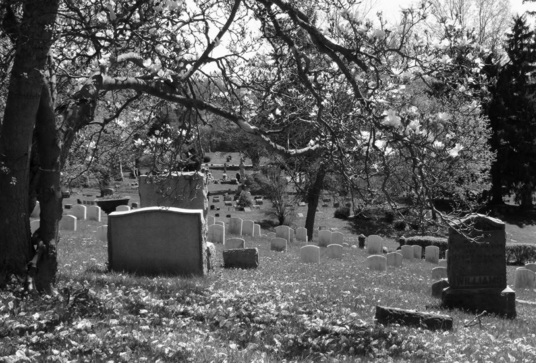 https://pixabay.com/en/cemetery-graveyard-magnolia-tree-987155/